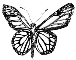 butterfly black and white pencil and in color