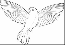 extraordinary parrot printable coloring pages kids parrot