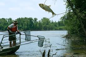escape of the invasives top six invasive plant species in the putting the brakes on fish invasions the why files