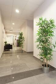 office design img 8611 imposing office plant design pictures