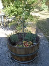 barrel planter planter designs ideas
