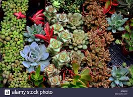 small succulents in small pots stock photo royalty free image