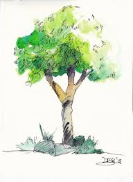 Oak Tree Drawing Oak Tree Drawing With Roots Chat De Baito