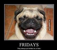Funny Dog Face Meme - funny dog face on friday meme 1 mum s lounge