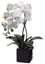 orchid plant allstate floral 20 inch artificial phalaenopsis orchid