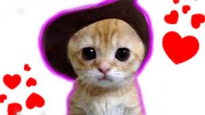 imagenes de gatitos sin frases gatitos tiernos enamorados youtube