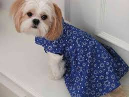 hanukkah vest a m dog apparel