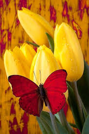Flowers For Birds And Butterflies - 474 best birds butterflies u0026 flowers u2022ƹ ӝ ʒ u2022 u2022ƹ ӝ ʒ