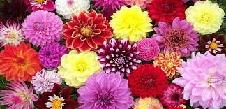 blooming flowers top 10 beauty blooming flowers in the world top 10 entertainment