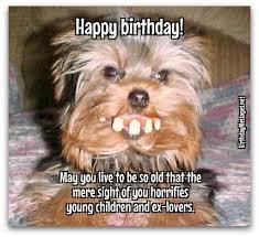 Happy Birthday Dog Meme - pin by debbie lebo on happy birthday pinterest birthday memes