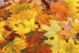 What Color Is An Orange Does A Wet Summer Mean A Brilliant Fall Howstuffworks