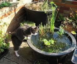 Container Water Garden Ideas 76 Best Container Ponds Ponds In A Pot Images On Pinterest