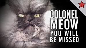 Grumpy Cat Has Died Youtube - r i p colonel meow you will be missed youtube