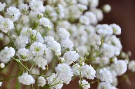 baby s breath flowers baby s breath wedding trend winter white flowers how to wire