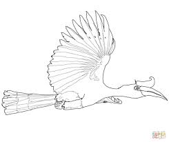printable rhinoceros hornbill bird coloring pages for kids