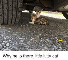 25 memes kitty kitty memes
