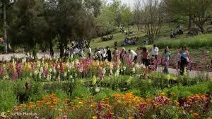 see what u0027s blooming at jerusalem botanical gardens israel21c