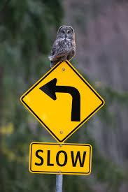 rare bird sightings share or shut up audubon