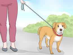 How to Train a Deaf Dog  VripMaster