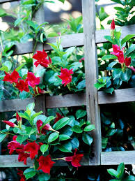 Patio Plants For Sun Tropical Flowers For Your Patio