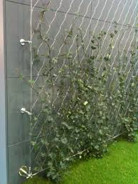 stainless steel wire used to support climbers for green wall