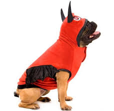 Martha Stewart Dog Halloween Costumes Petsmart Offering 10 Savings Pet Halloween Costumes Toys