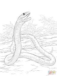 black mamba print and download coloring pages animal mamba