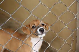 new salt lake county ordinance mandates pet stores sell only
