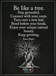be like a tree the daily quotes