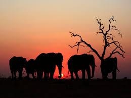 do elephants have souls the new atlantis