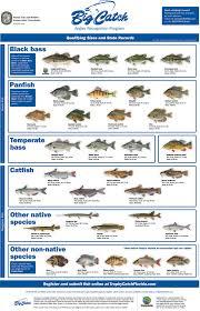 florida freshwater fish chart