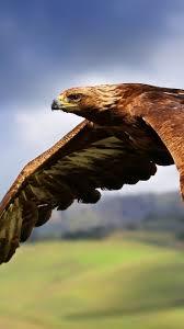 download wallpaper 750x1334 eagle birds predators flight wings