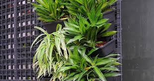 modular greenwall vertical garden system now available low cost