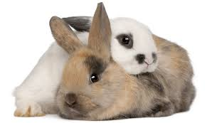 rabbit bunny say rabbit rabbit on the day of the month