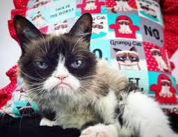 215 best grumpy cat humor images on pinterest funny pics grumpy