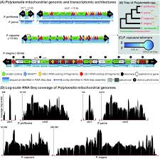recovering complete mitochondrial genome sequences from rna seq a