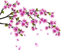 cherry blossom tree vector free vector 5 711 free vector
