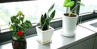 best plant for desk best desk plants dynamicpeople club
