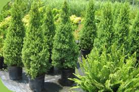 home depot coupon trees shrubs save 10 when you spend 50