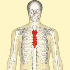 Abdominal Anatomy Quiz The Buzzfeed Anatomy Quiz