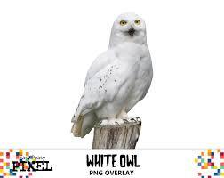 owl item white owl digital overlay