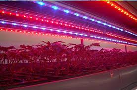 hydroponic led grow lights gled 5pcs 10w grow light bars light strip for hydroponic plant