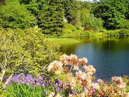 jardin feng shui feng shui plants outdoor