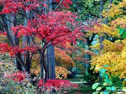 the most beautiful trees i ve seen guttridge