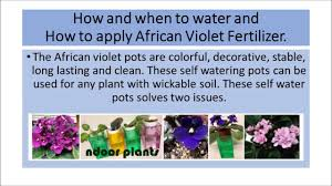self watering pots for african violets waddell az youtube