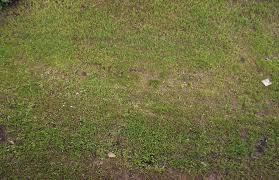 ground textures free ground grass textures for 3d modeling design and game