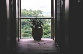 the best indoor plants for your apartment apartment developments