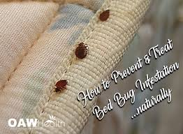 light bed bug infestation how to prevent and treat bed bug infestation naturally