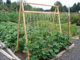 amazon com trellis netting for smart gardeners supports