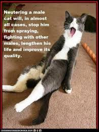 Cat Facts Meme - 19 best cat facts images on pinterest kitty cats pets and cat stuff